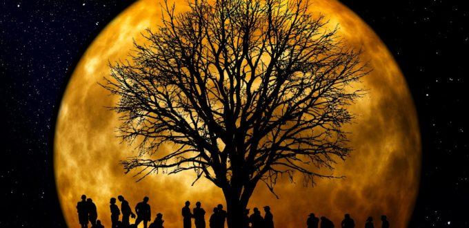 Sällskap och inspiration under trädet.